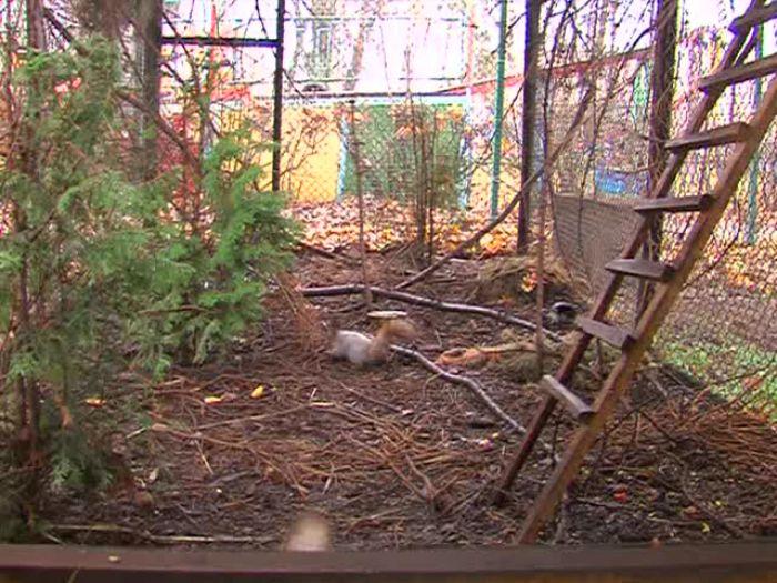 Импульс\u002DТВ: Белки готовятся к зиме