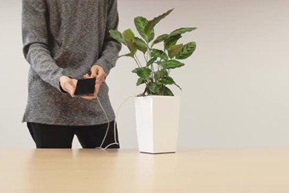 Вweb-сети интернет показали цветочный горшок для зарядки телефона