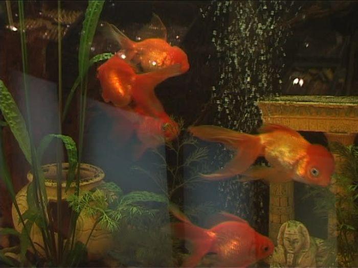 ДТВ\u002DРапид: Ювелирный салон «Золотая рыбка»: выбор за тобой!