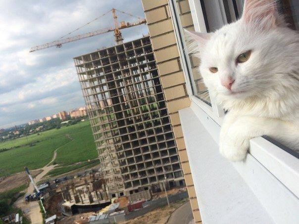 7 занятных видео сусатыми питомцами— Всемирный день кошек