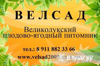 """С 1 апреля питомник """"ВЕЛСАД"""" начнёт продажу саженцев с закрытой корневой…"""