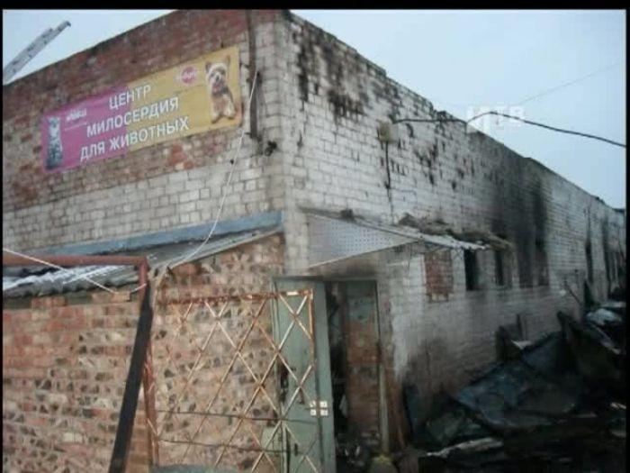 Импульс\u002DТВ: Пожар в городском приюте для животных