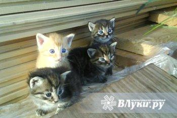 Отдам в хорошие руки милых котят!