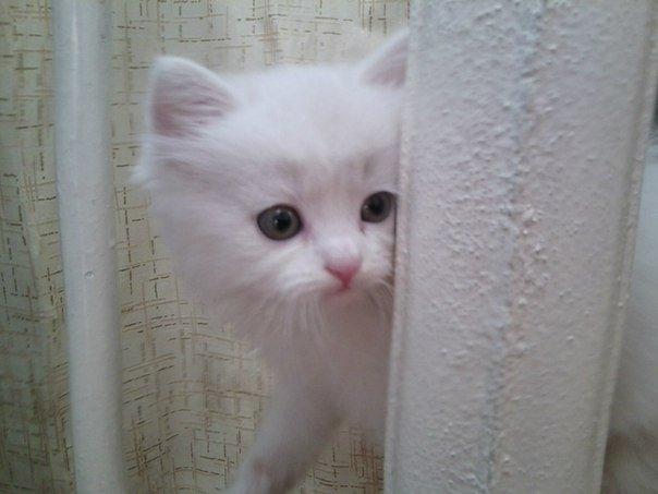 Всемирный день кошек: 7 занятных видео сусатыми питомцами