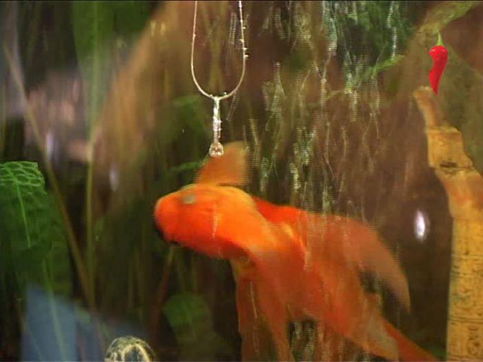 Перец\u002DРапид: Ювелирный салон «Золотая рыбка»