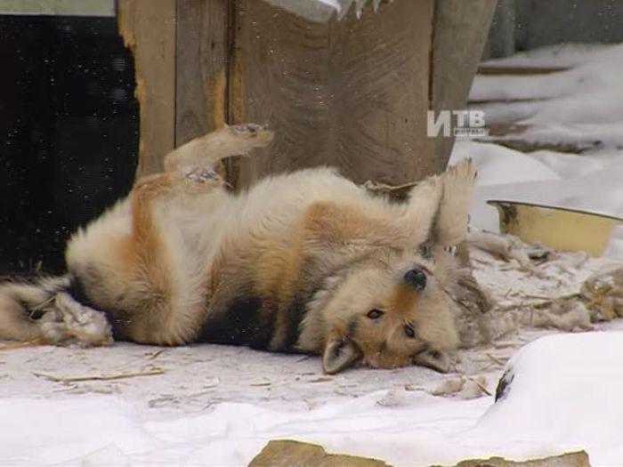 Импульс\u002DТВ: Приют для животных