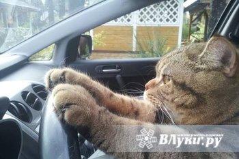 ищу работу водителем кат.В,С стаж 8 лет,без в/п.также имеются навыки и опыт…