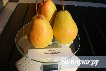 Саженцы новых и лучших районированных сортов плодово-ягодных культур из…