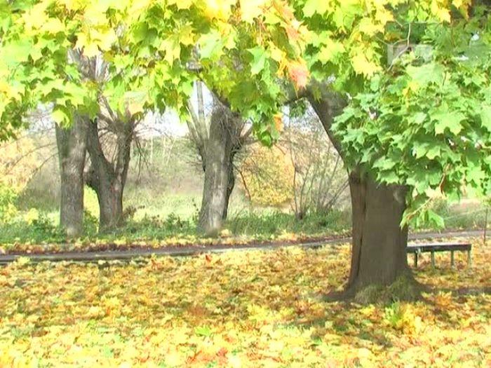 Импульс\u002DТВ: Осенний кросс