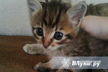 Ищут дом пятеро котят : три мальчика и две девочкиОтлично кушают и осваивают…