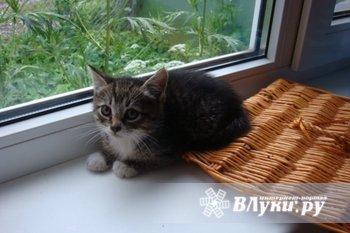 В хорошие руки (или за символическую плату) отдаем двух прекрасных котят.…