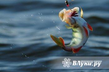 Товары для рыбалки и активного отдыха. Магазин «Рыб☺Love»