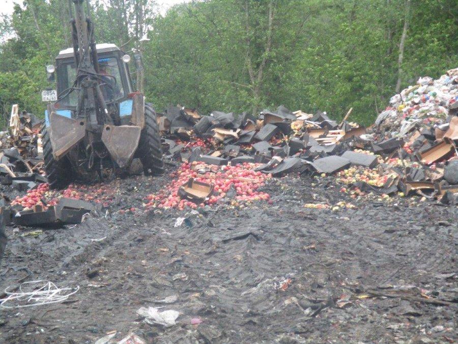 ВПсковской области уничтожили неменее 54 тонн польских яблок