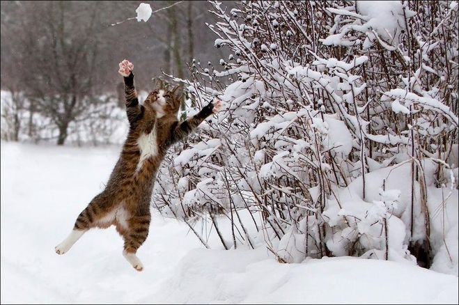 Погода наНовый год внекоторых областях будет «весенней»— Синоптики