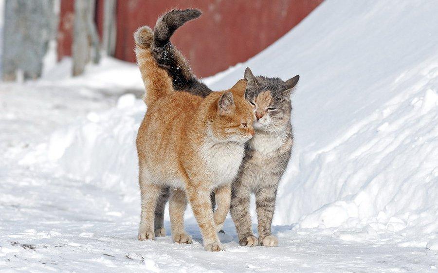 День имени, картинки зима животные любовь