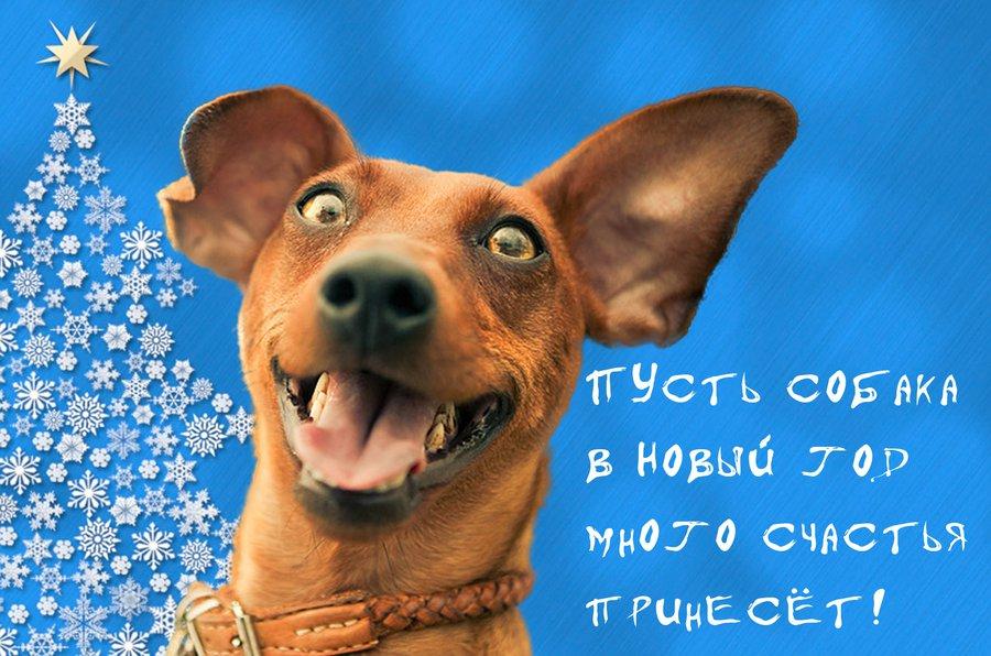 Прикольные открытки с годом собаки