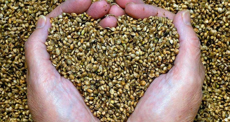 Ввоз семян конопли в рф купить марихуану в новосибирске