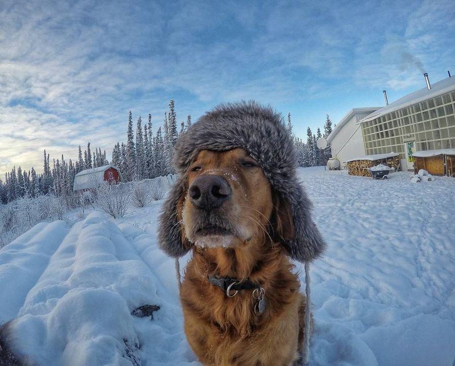 разобрался, картинки зима холода с добрым утром сочельник