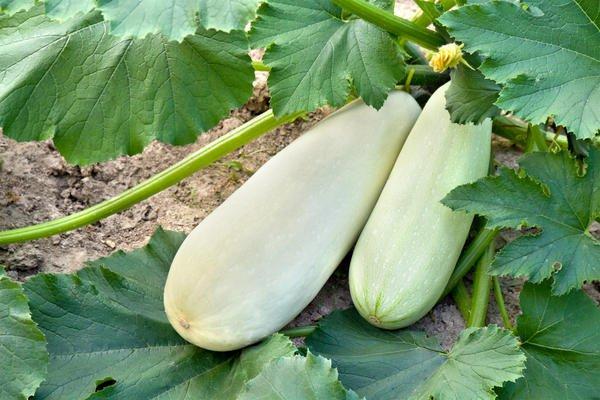 Синоптики посоветовали дачникам укрывать урожай от заморозков рекомендации