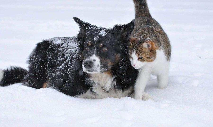 Прикольные картинки коты собачки зима снег