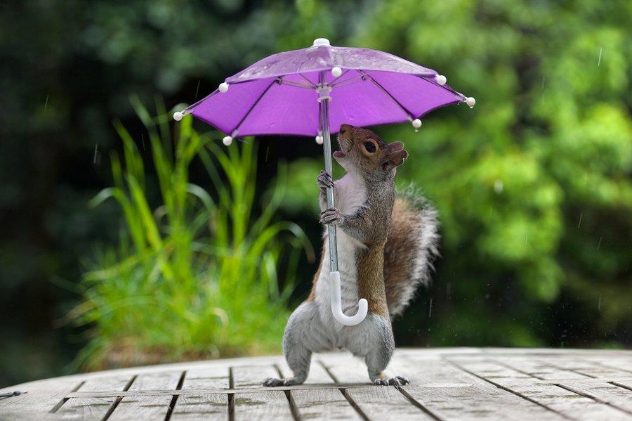 Февраль месяц, про дождливое лето смешные картинки