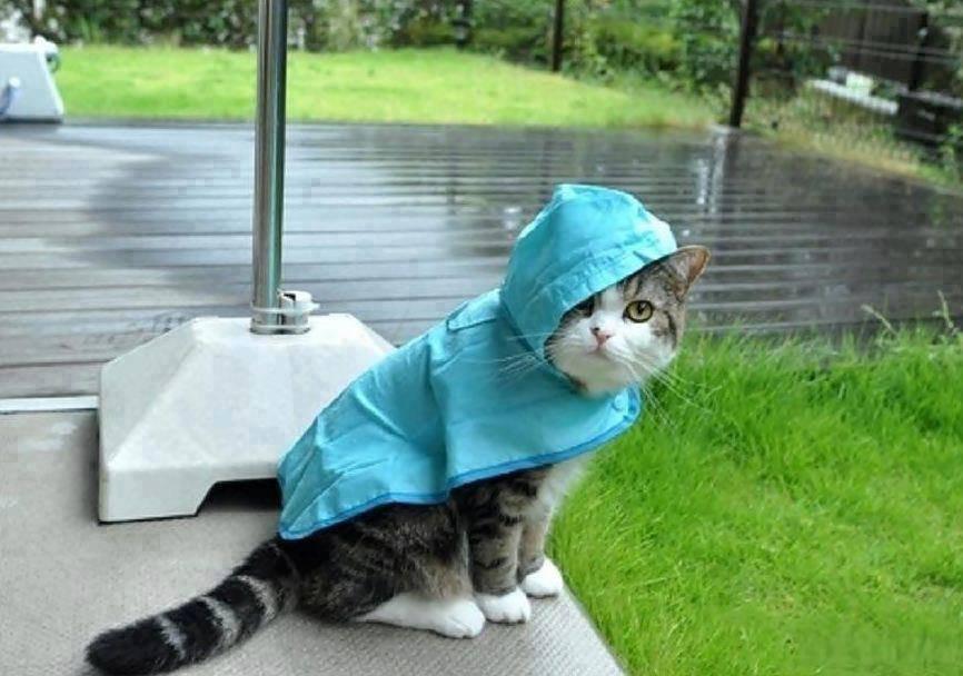 дождь в июне картинки прикольные получения абсолютно