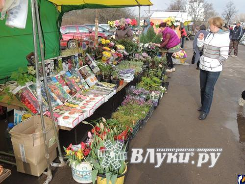 Птичий рынок в пскове фото